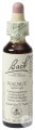 Bach Flower Remedie 33 Walnut (Noyer) 20ml